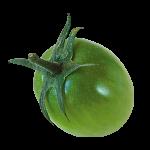 カラートマト グリーン