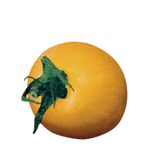 カラートマト イエロー