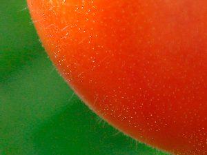トマトの表面に産毛